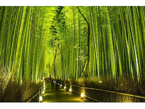 5.竹林の小径